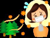 横浜市の工務店「せらら工房」のイベント&ニュース 杉の木