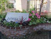 横浜市の工務店「せらら工房」のイベント&ニュース Jewelのお花リニューアルしました