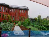 横浜市の工務店「せらら工房」のイベント&ニュース 今年も豊作 レンガの家の無農薬農園