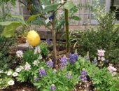 横浜市の工務店「せらら工房」のイベント&ニュース 夏の装い レンガの花壇も夏バージョン