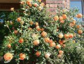 バラとレンガの壁