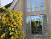 春の訪れ レンガの家とみもざの花