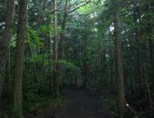 横浜市の工務店「せらら工房」のイベント&ニュース 自然の脅威 マイナスイオン