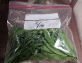 家庭菜園で美味しな野菜