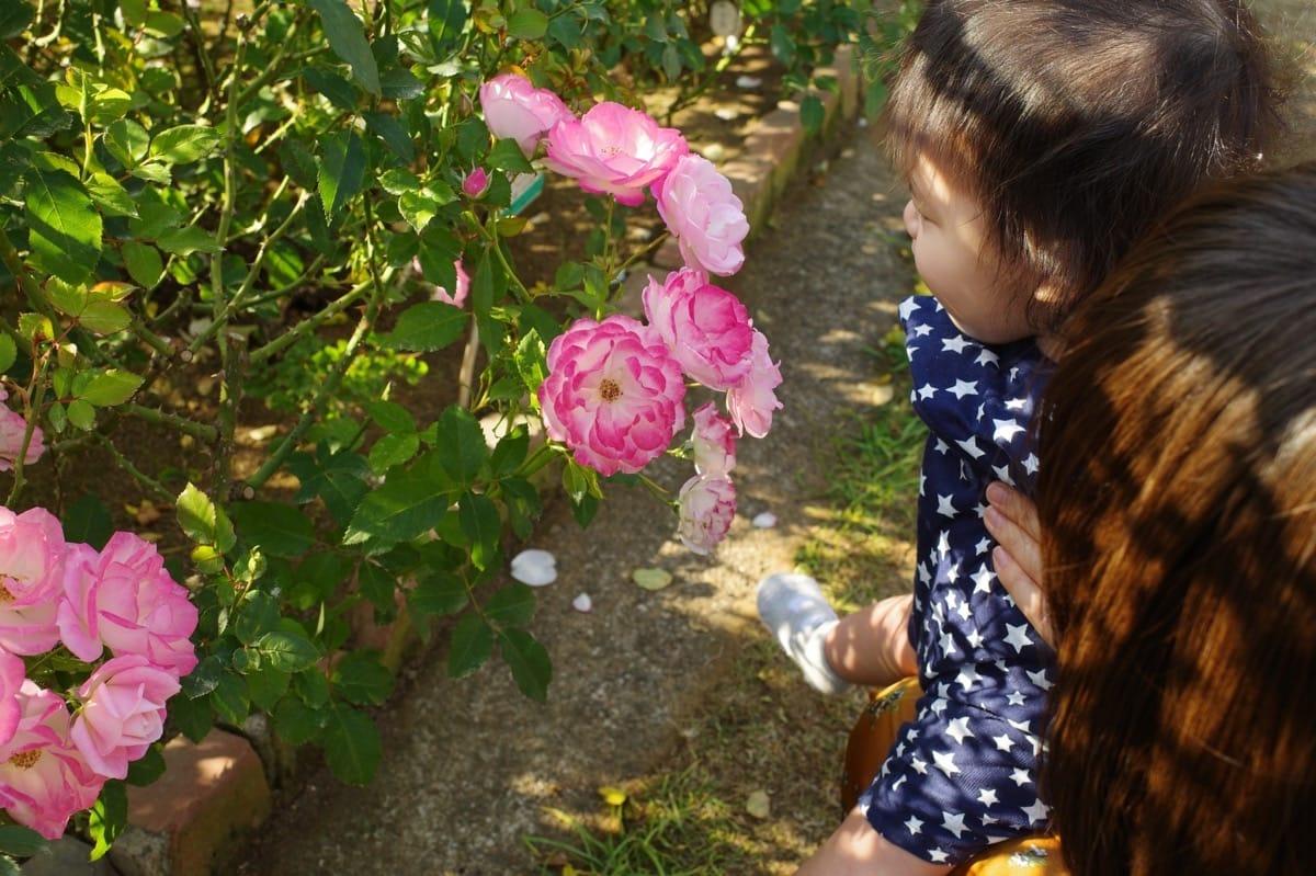 神奈川の工務店、薔薇と子ども
